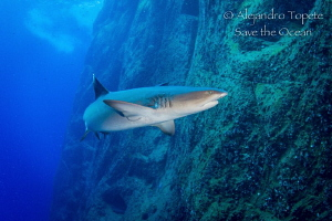 Withe tip Shark, Roca Partida Mexico by Alejandro Topete