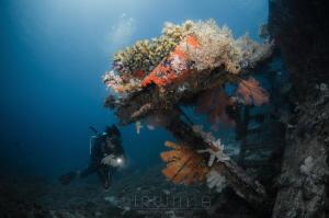 B L U E Bounty Wreck  Lombok (Gili), Indonesia. March 2016 by Irwin Ang