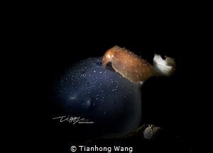 TRANSFORMER Newly born by Tianhong Wang
