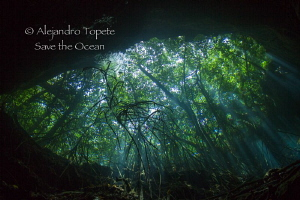 Eye of the cenote, Tulum Mexico by Alejandro Topete