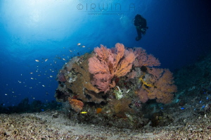 B I G - R O C K Hidden reef Lombok (Gili), Indonesia. M... by Irwin Ang