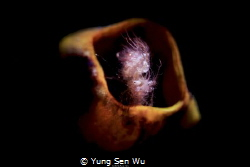Location :Lembeh Indonesias Canon 5dsr Canon EF 100mm f/2... by Yung Sen Wu