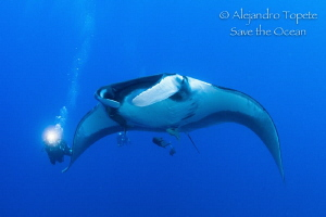 Divers following Mantaray,Isla San Benedicto Mexico by Alejandro Topete