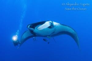 Divers following Mantaray,Isla San Benedicto Mexico by Alejandro Topete