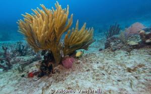 colorful reef by Antonio Venturelli