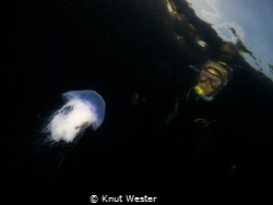 A blue jellyfish hovering before a snorkeler. by Knut Wester