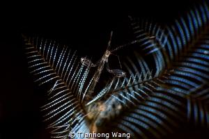 WELCOME by Tianhong Wang