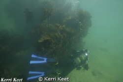 Diver exploring an old wreck of a barge just off one of o... by Kerri Keet