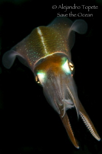 Squid move, Veracruz Mexico by Alejandro Topete