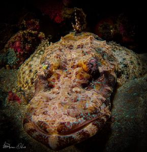 Crocodile fish in colored up ambush mode by Steven Miller