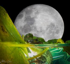 Glow bug by Steven Miller