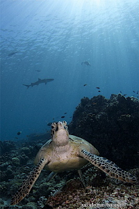 Turtle and Shark by Iyad Suleyman