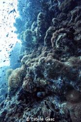 a eel hide in the rocs by Estelle Gasc