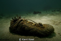Artificial Reef made from someone's lost shoe! by Kerri Keet