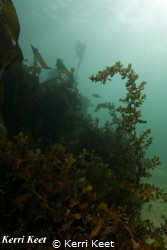 Beautiful temperate water garden surrounding an old barge... by Kerri Keet