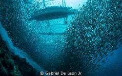 Swarmed by Gabriel De Leon Jr