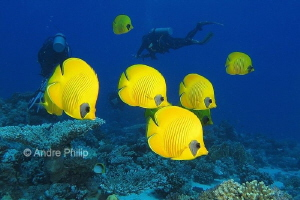 """Yellow and blue"", a wonderful combination - Bluecheek bu... by Andre Philip"