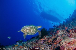 A sea of clarity by Frankie Rivera
