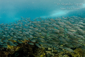 Salemas show, Punta Vicente Roca, Galapagos by Alejandro Topete