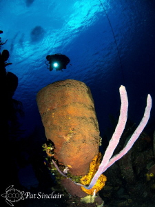 A gorgeous sponge on the wreck of the Doc Poulson. by Patricia Sinclair