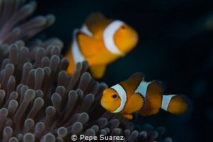 Nemo and Merlin at their house :) by Pepe Suarez