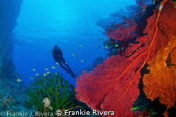 My Dive Buddy enjoying the beautiful coral formation from... by Frankie Rivera