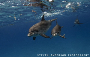 Images and sights like this make a long run worthwhile fr... by Steven Anderson