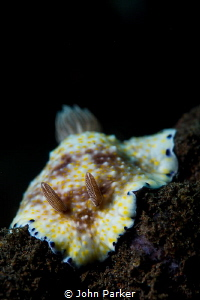 Nudibranch by John Parker