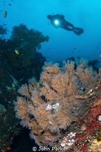Reef Scene Tulamben by John Parker