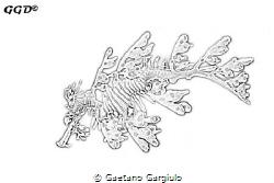 sea dragon sketch by Gaetano Gargiulo