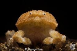 Pearl Granular Crab by George Low