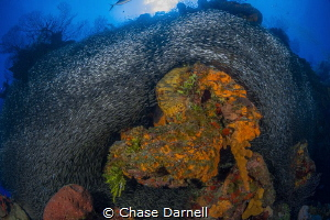 """Seahorse Sponge"" 