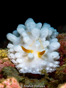 Knobs and Dials 