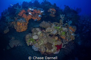 """""""Game On"""" As the Silversides pack tightly around the out... by Chase Darnell"""