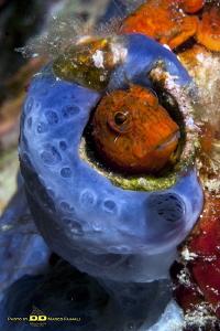 Peep from my sponge! by Marco Faimali (ismar-Cnr)