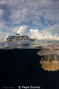 Jelly fish after a dive by Pepe Suarez