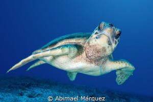 Friendly Turtle at Punta Venado, Playa del Carmen. by Abimael Márquez