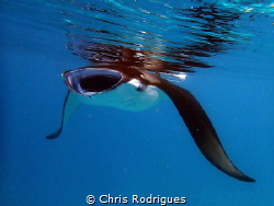 Manta Ray in Hanifaru Bay, Baa Atoll taken with Olympus T... by Chris Rodrigues