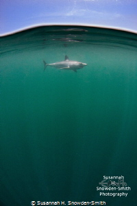 """""""Just Below The Surface"""" A mako shark cruises just under... by Susannah H. Snowden-Smith"""