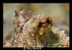 Octopus eye by Niky Šímová