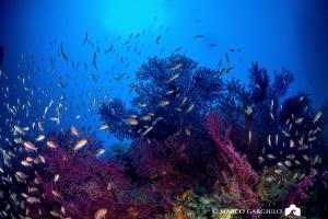Reefscapes @ Capri Island by Marco Gargiulo