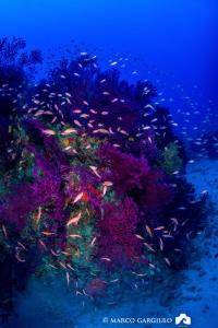 Paramuricea @ Capri Island by Marco Gargiulo