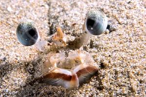 Shrimp trying to hide itself. by Mehmet Salih Bilal