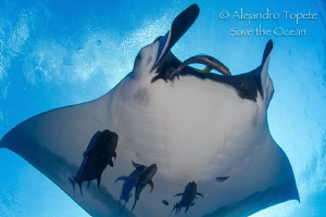 Close encounter with Mantaray, San Benedicto Mexico by Alejandro Topete