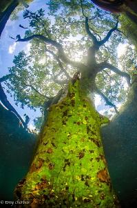 Tesla Tree by Tony Cherbas