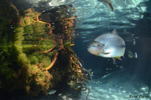 Brazil river encounter by Raoul Caprez