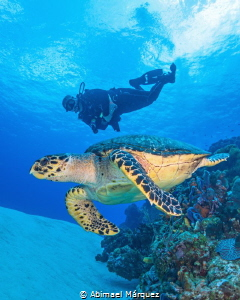 The Turtle and Evelio, C0zumel. by Abimael Márquez