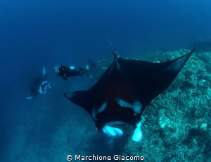 Mantas and model