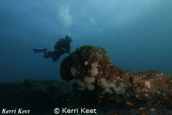 Diver admiring the view over Aliwal Shoal by Kerri Keet