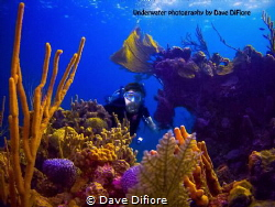 Me underwater by Dave Difiore